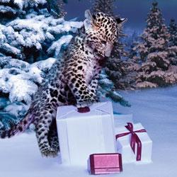 Cartier Noël 2012